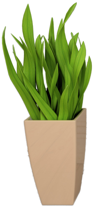 images/slider/intro/flower-pot.png